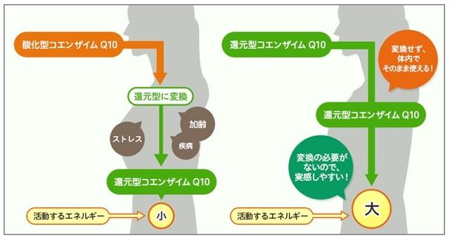 コエンザイムQ10酸化型と還元型の違い