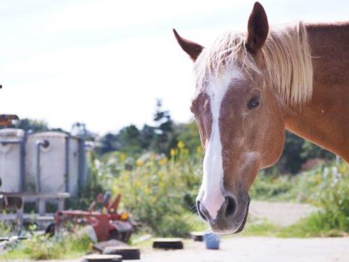 馬プラセンタを使うメリットは品質の高さ