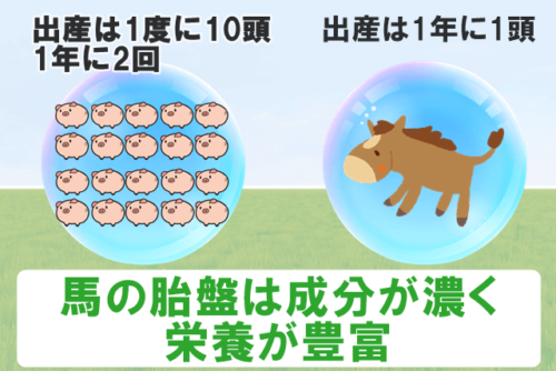 馬の胎盤は成分が濃く栄養が豊富