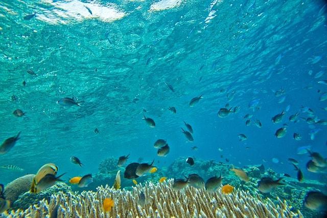 サンゴと水